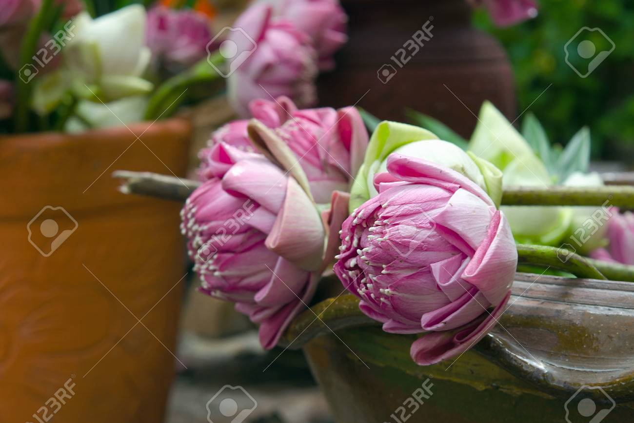 A Container Of Lotus Flowers For Praying And Worship Stock Photo