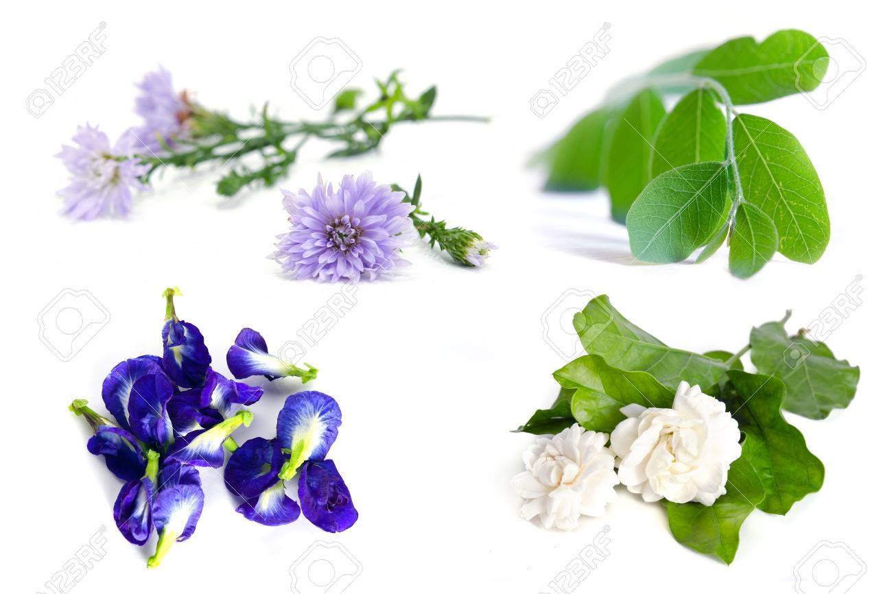 Group of plant and flower moringa plant leaf jasmine flower group of plant and flower moringa plant leaf jasmine flower butterfly pea izmirmasajfo