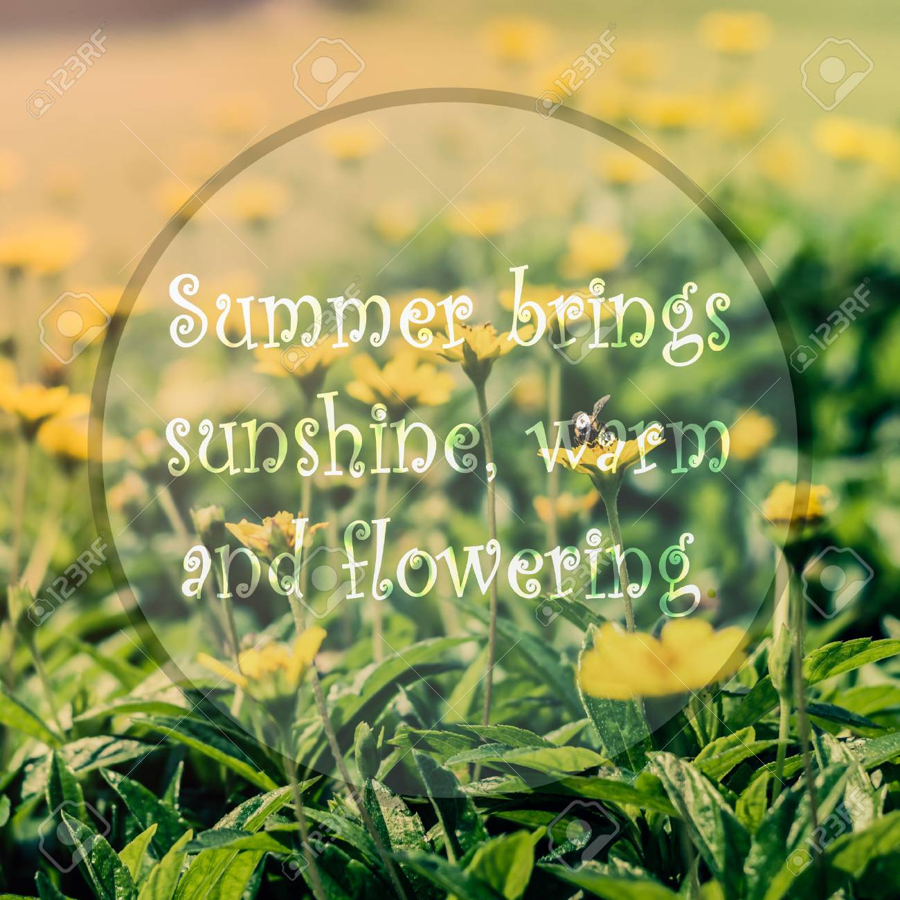 Meaningful Quote On Blurred Yellow Flower Background Summer Stock