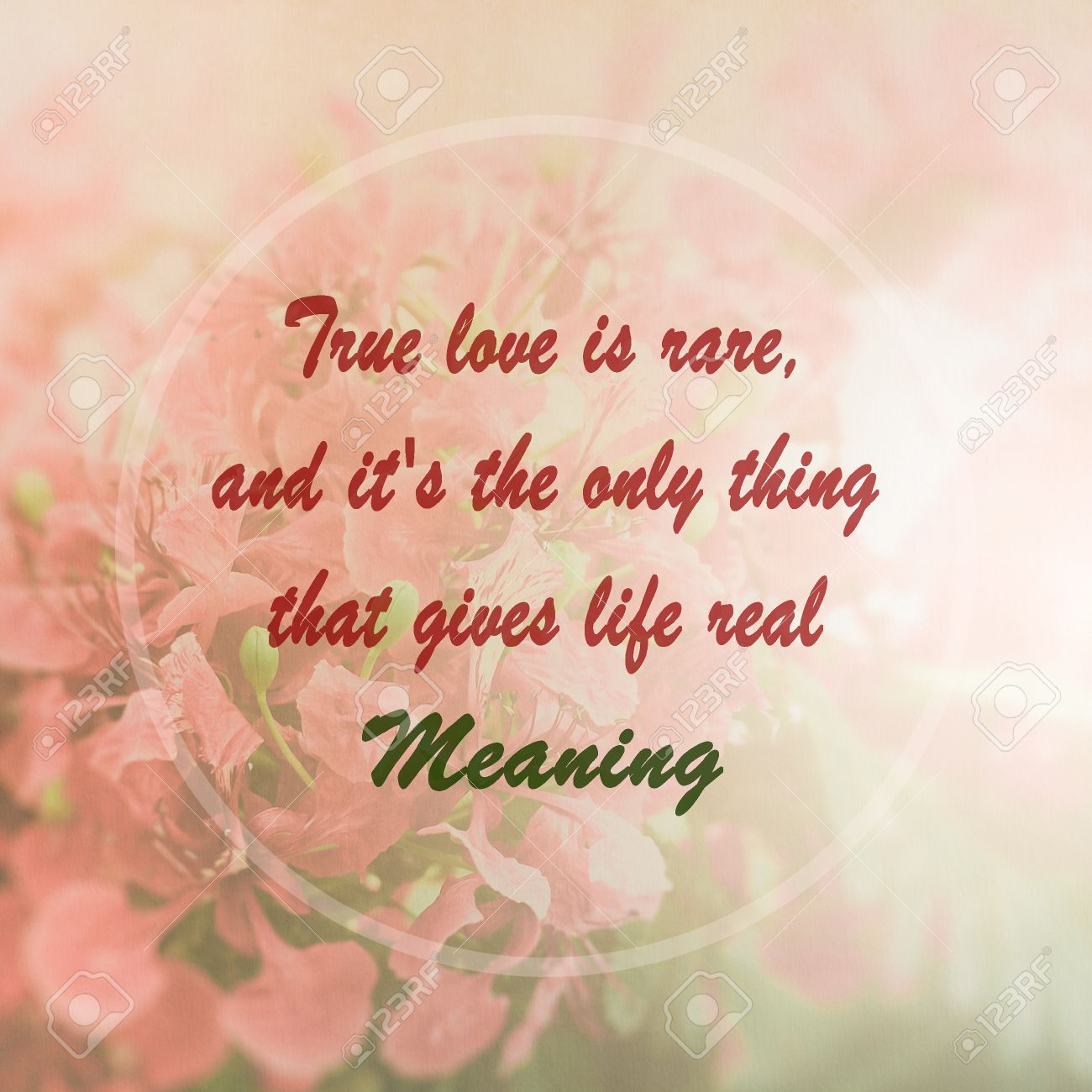 Meaningful Quote On Pink Flower Background True Love Is Rare