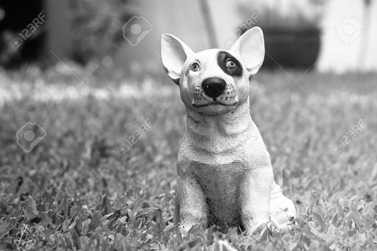 Cute white dog standing on green grass in garden for decoration black and white