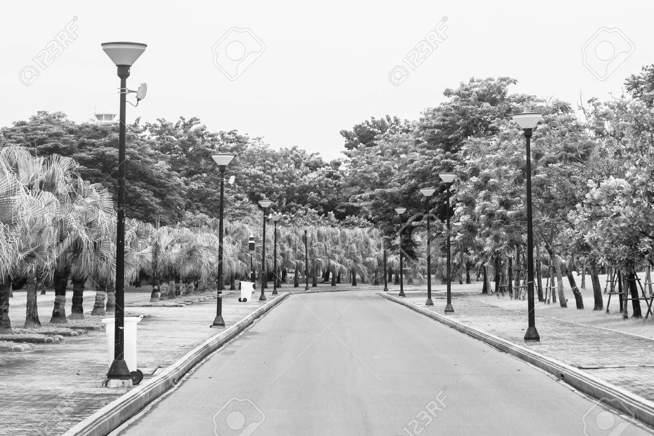 Stock photo view of empty road flanked with street lamp and green natural background black and white filter effect