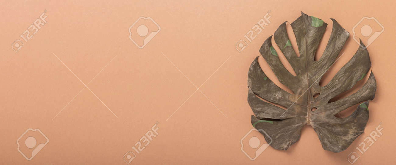 Dry tropical monstera leaf on brown background. Top view, flat lay. Banner. - 171847672