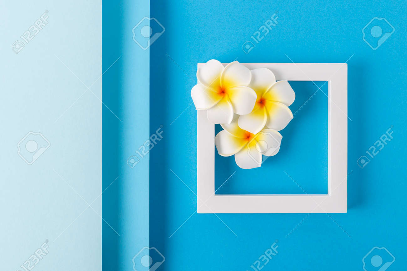 Frangipani flowers on a square podium on a folded blue background. Top view, flat lay. - 171847680