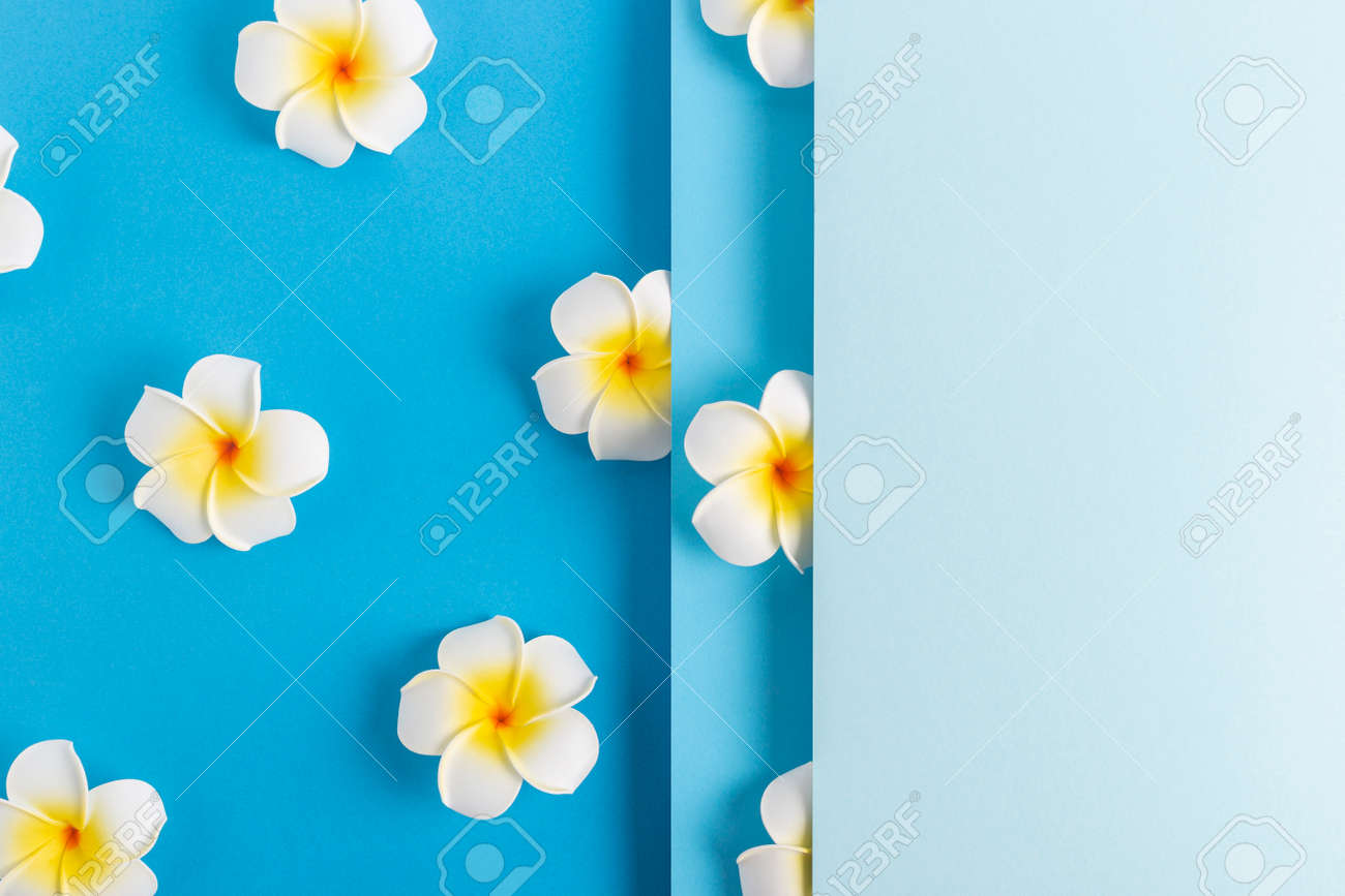 Frangipani flowers on a folded blue paper background. Top view, flat lay. - 171847709