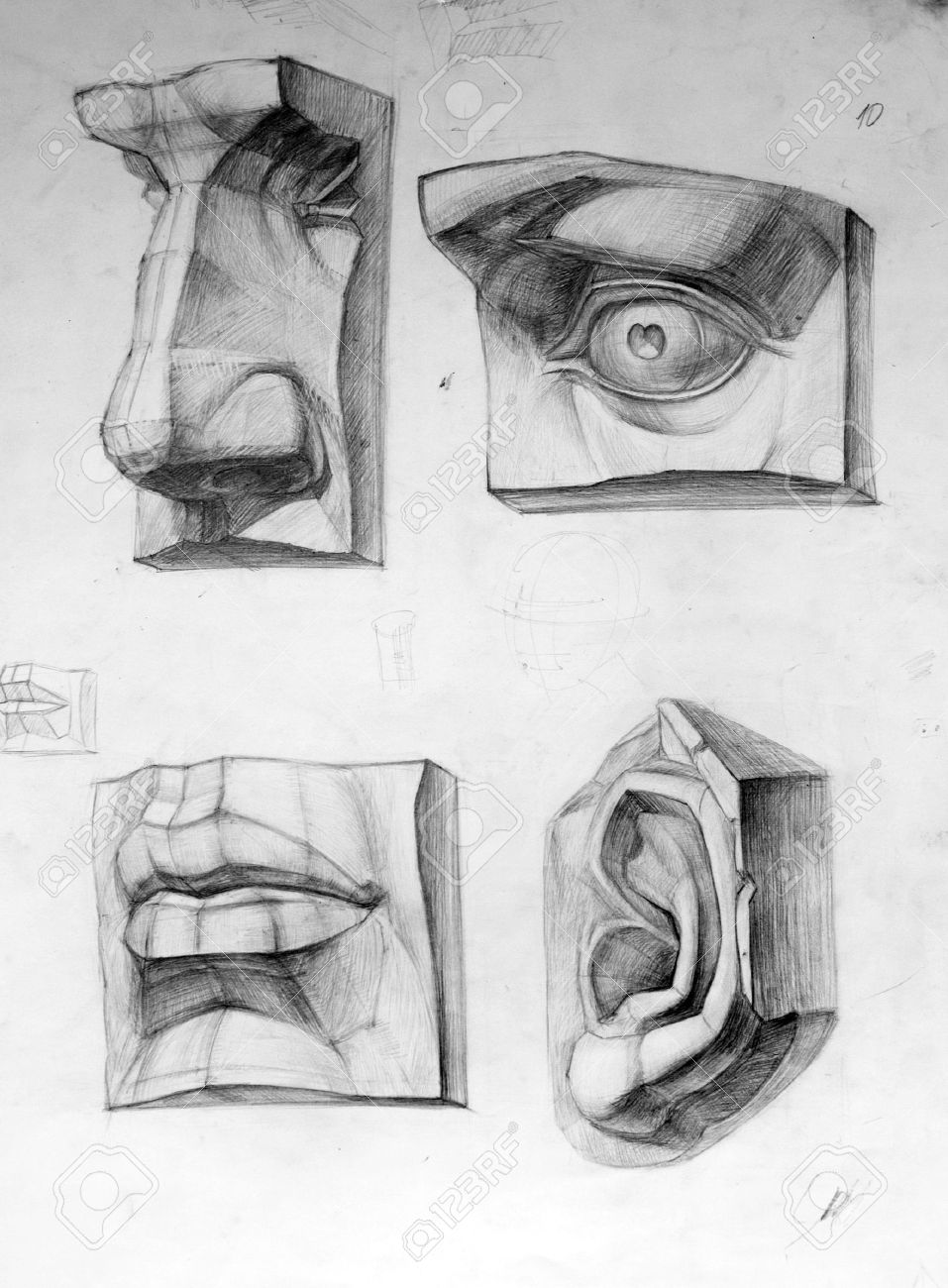 Parts Of Face Stock Photo, Picture And Royalty Free Image. Image ...