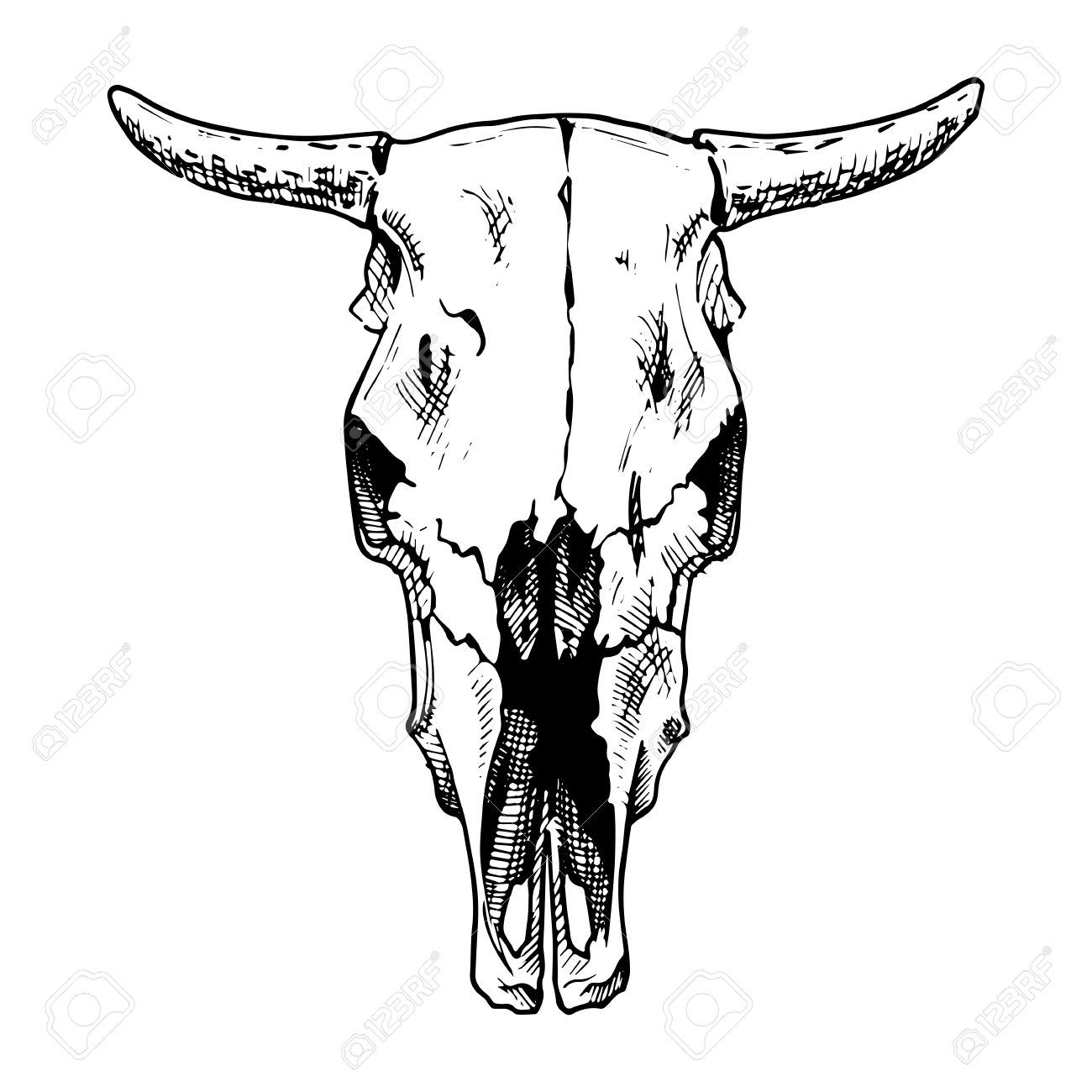 vector illustration of cow skull stylized as engraving face