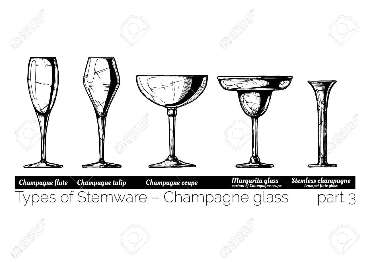 Types of champagne glass. Flute, tulip, coupe, margarita and stemless glasses. illustration of stemwares in vintage engraved style. isolated on white background. - 81762070