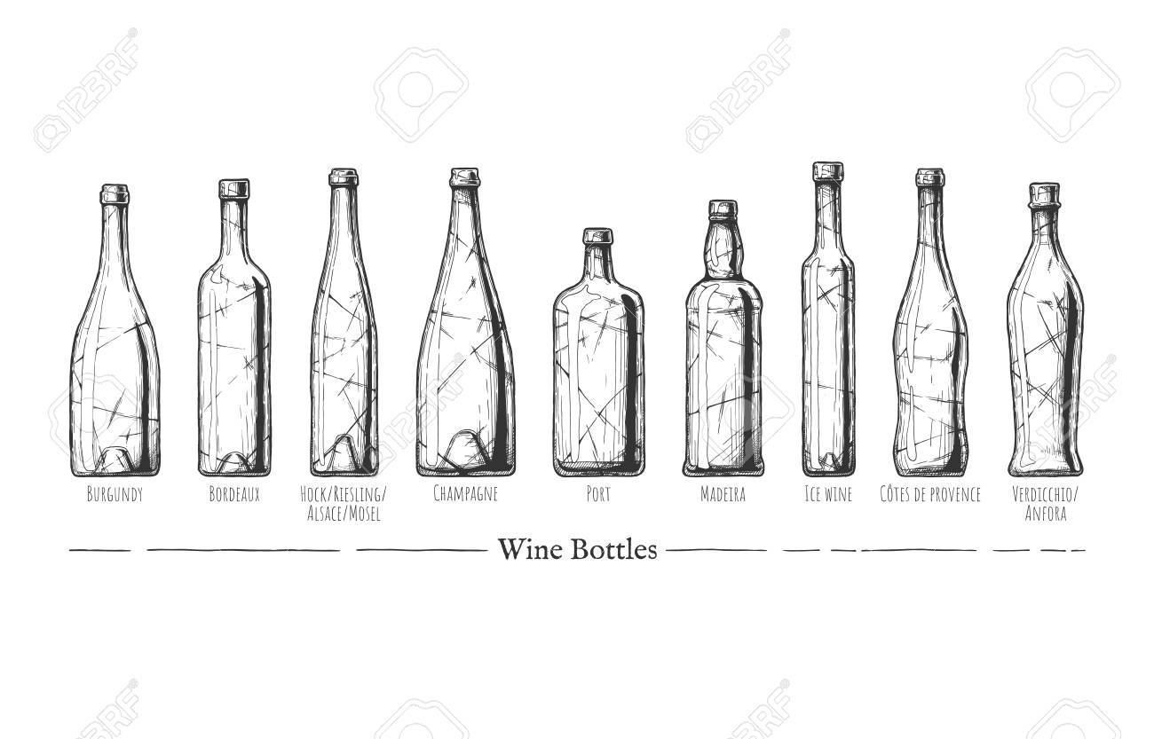 Vector Hand Drawn Illustration Of Wine Bottle Types In Vintage Engraved Style Burgundy Bordeaux