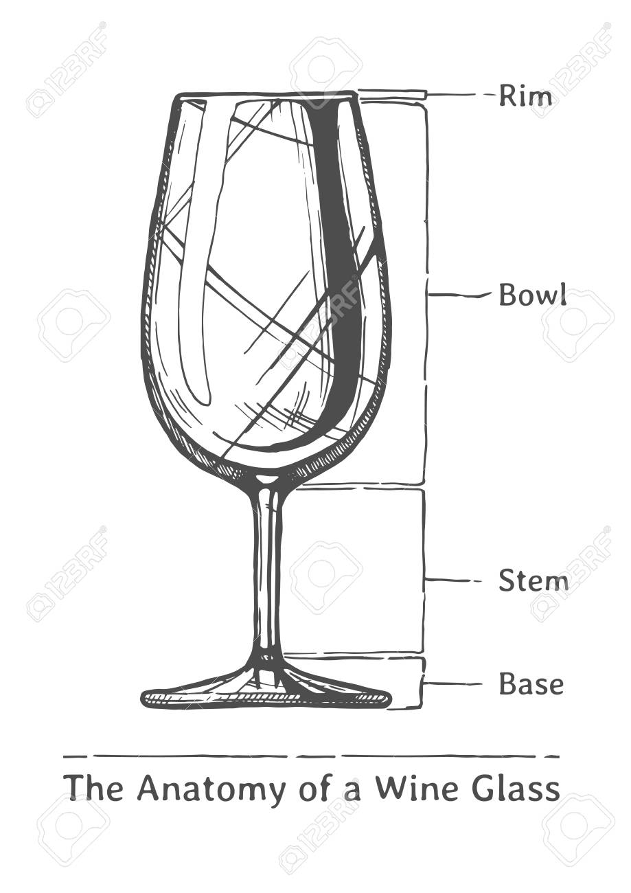 The Anatomy Of A Wine Glass Rim Bowl Stem And Base Illustration