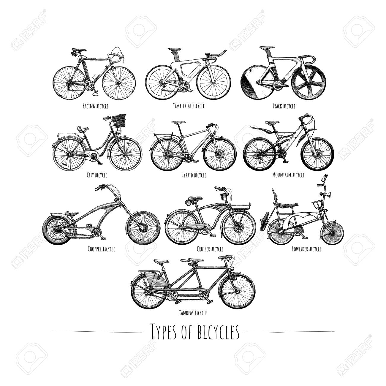 Types Of Bicycles >> Types Of Bicycles Vector Hand Drawn Illustration Of Different