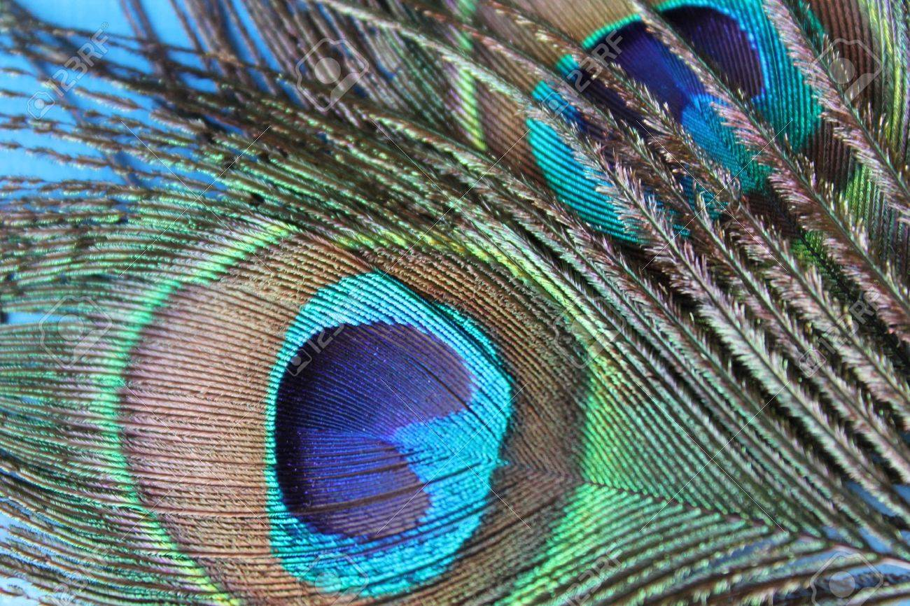 Photo with bright peacock feathers Stock Photo - 12108879