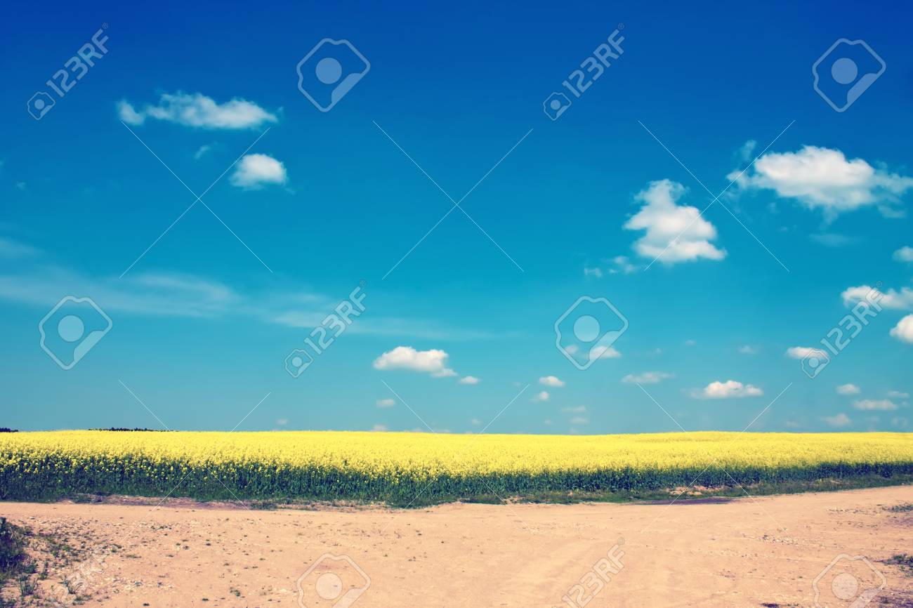 Beautiful landscape with yellow fields with flowers and blue sky Stock Photo - 14016867