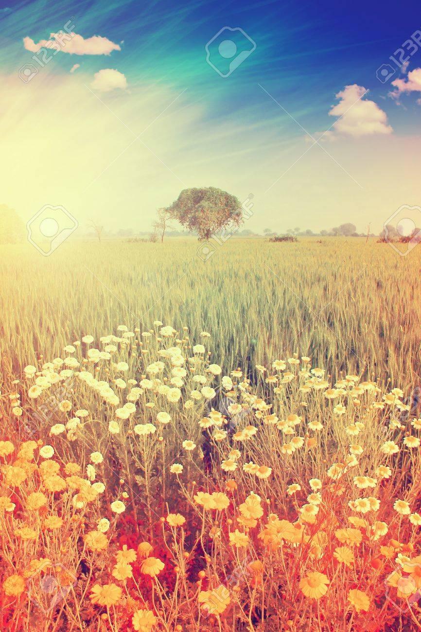 Bright landscape Stock Photo - 14589992