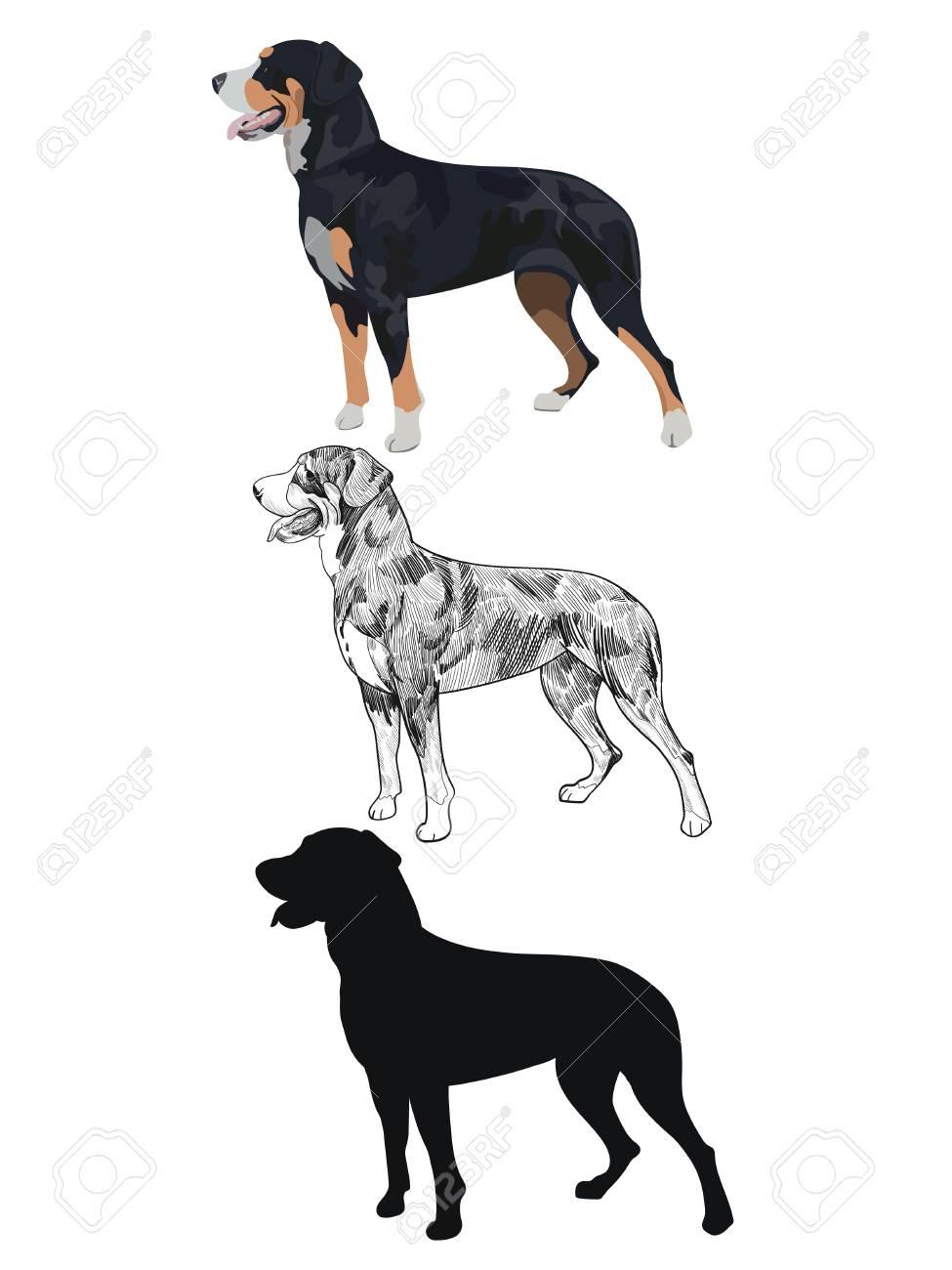 Sennenhund arten