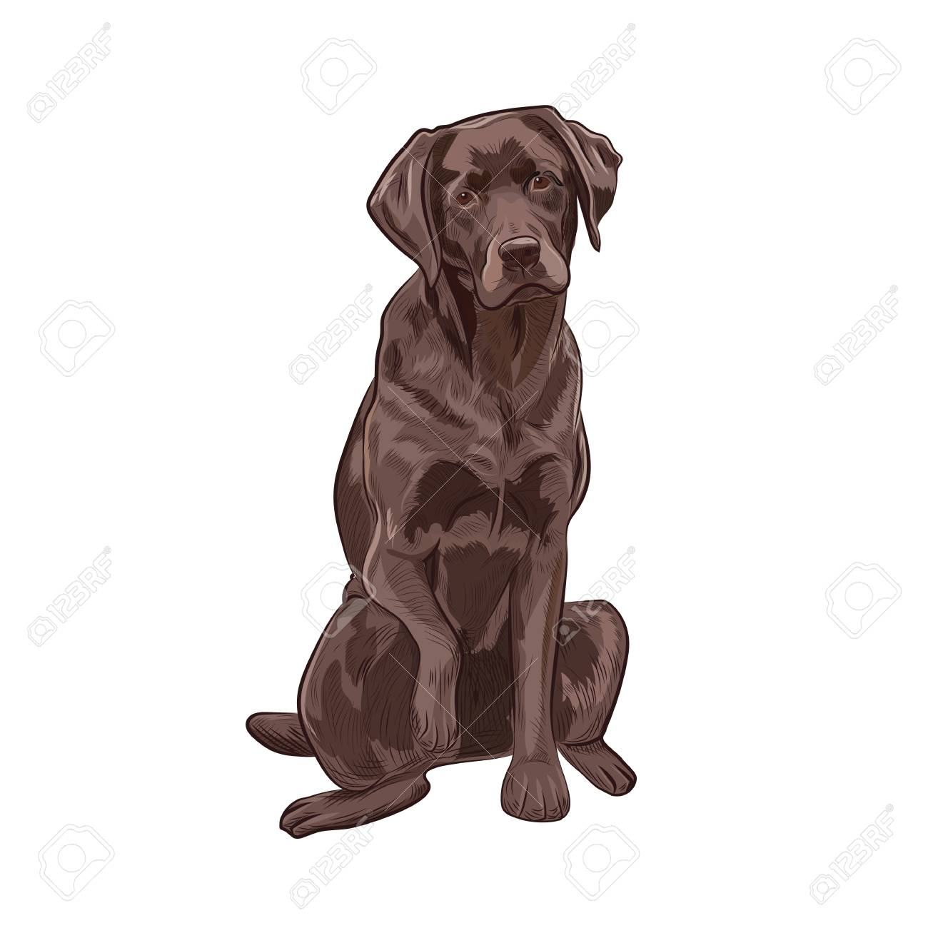 Cool Chocolate Brown Adorable Dog - 97406090-chocolate-labrador-sitting-and-giving-a-paw-brown-dog-isolated-on-white-background-adorable-purebred  You Should Have_759737  .jpg