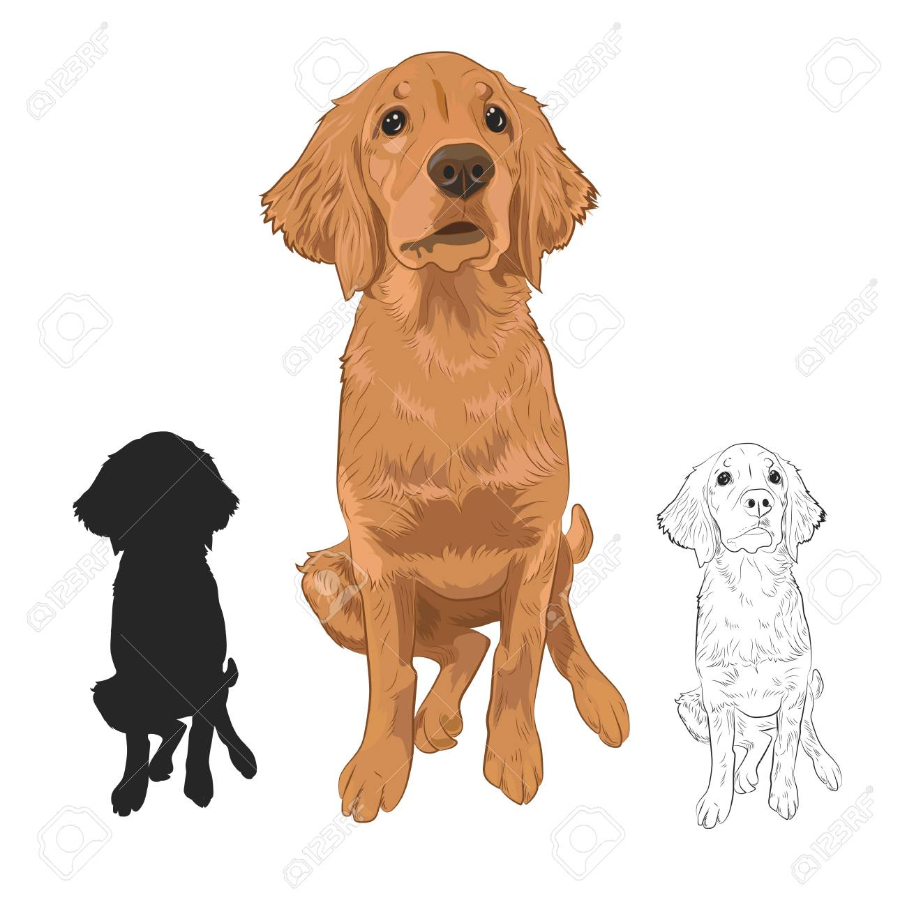 Golden Retriever Puppy Isolated On White Background Cute Purebred Royalty Free Cliparts Vectors And Stock Illustration Image 97421337