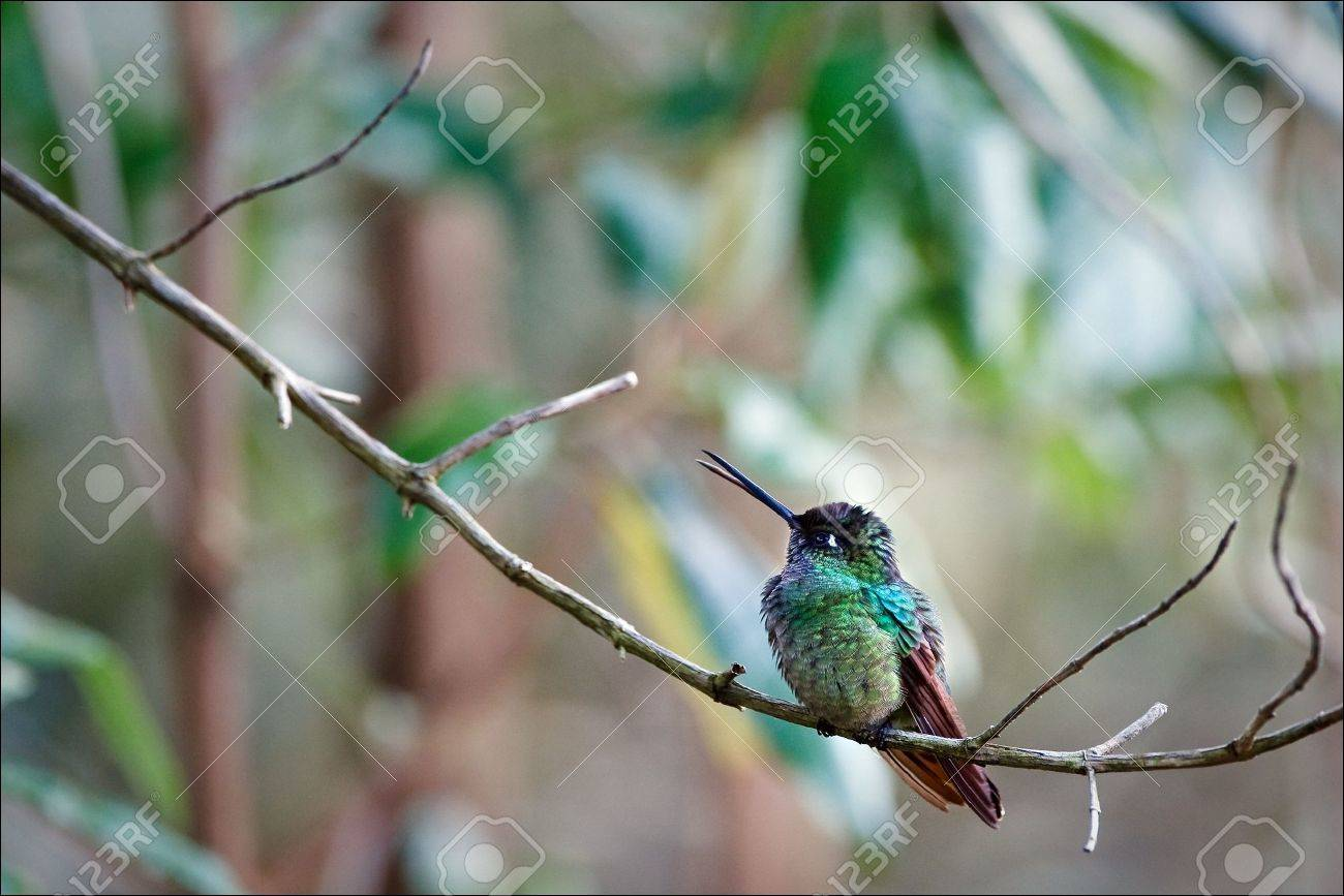 The hummingbird sits on a branch against pastel color stains. Stock Photo - 7756908