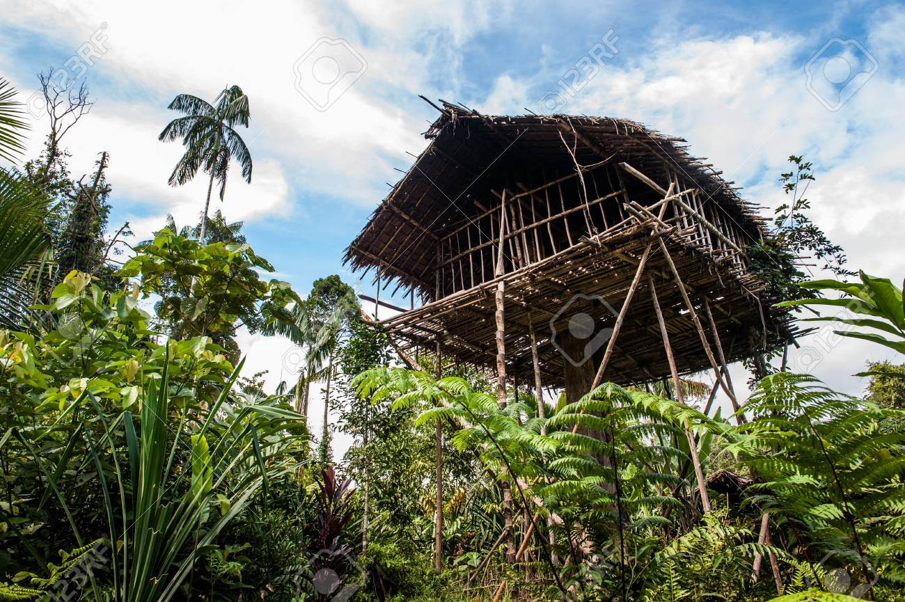 Picture of: Traditional Koroway House Perched In A Tree Above The Ground Stock Photo Picture And Royalty Free Image Image 100548546