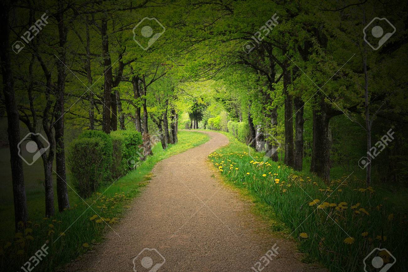 Mystical path through a dark forest with back lighting Stock Photo - 24913655 : mystical lighting - azcodes.com