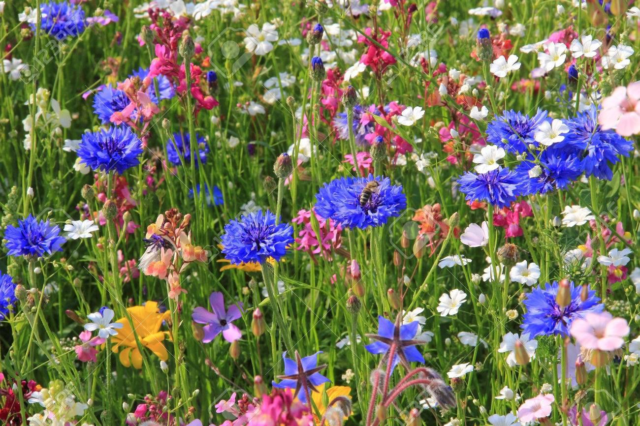 Schöne Blumenwiese In Lebendigen Farben Lizenzfreie Fotos Bilder