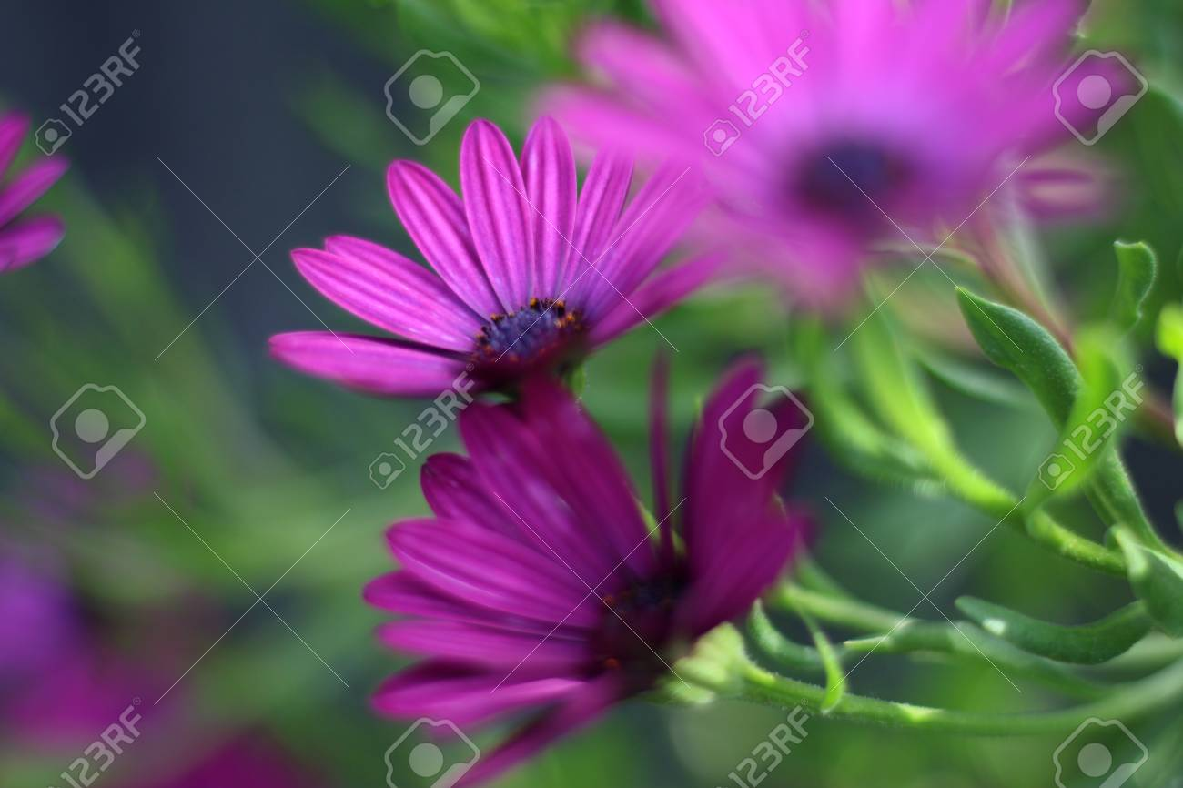 Colorful Flowers Growing In The Garden In Spring And Summer Stock