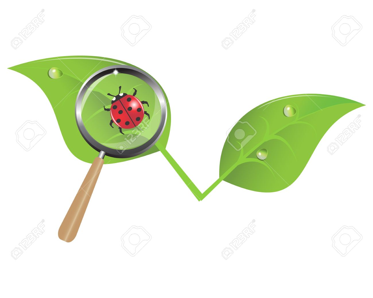 ladybug on a leaf and a magnifying glass Stock Vector - 14961161