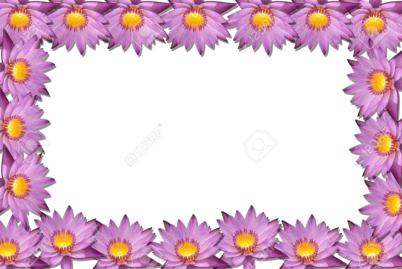 Lotus flower blossom isolate on white background Stock Photo - 9194951