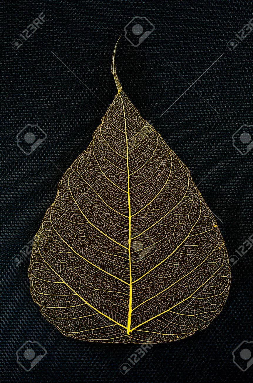 skeleton leaf pho on a black background Stock Photo - 23188043