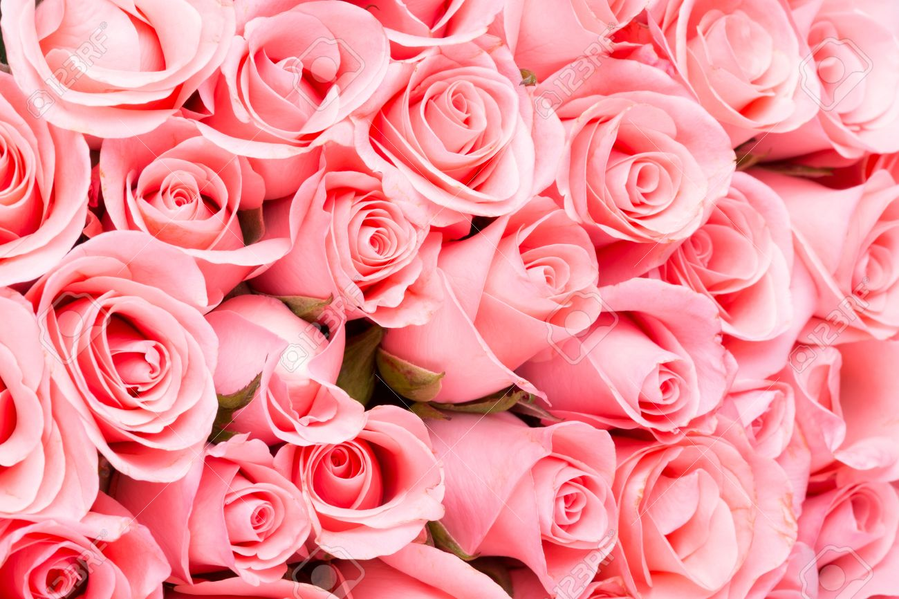 Pink Rose Flower Bouquet Background Stock Photo Picture And Royalty