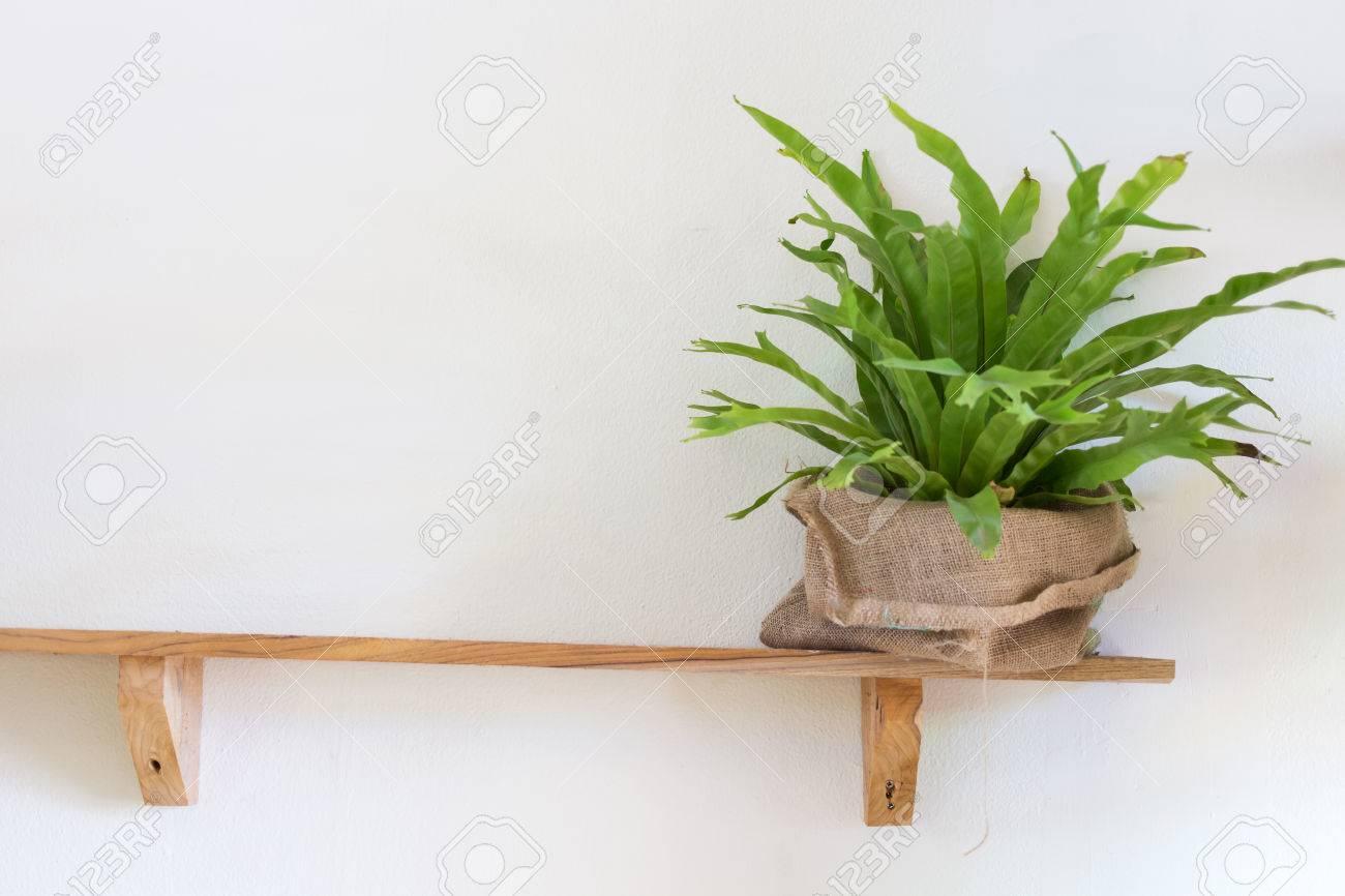 Pot Plante En Bois petit arbre plante en pot sur étagère en bois décoré chambre intérieure  avec mur blanc