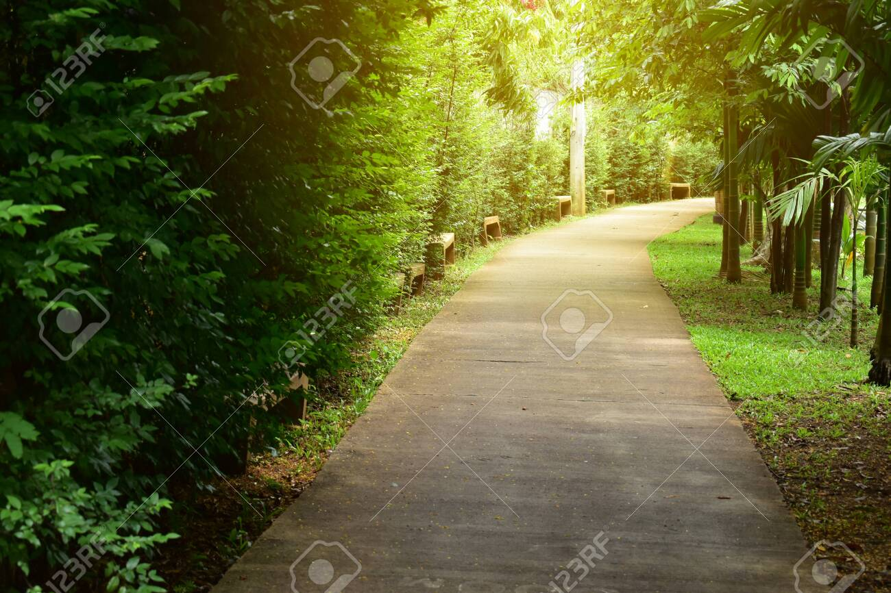 pathway in green nature of public park of walking relaxation - 139026541