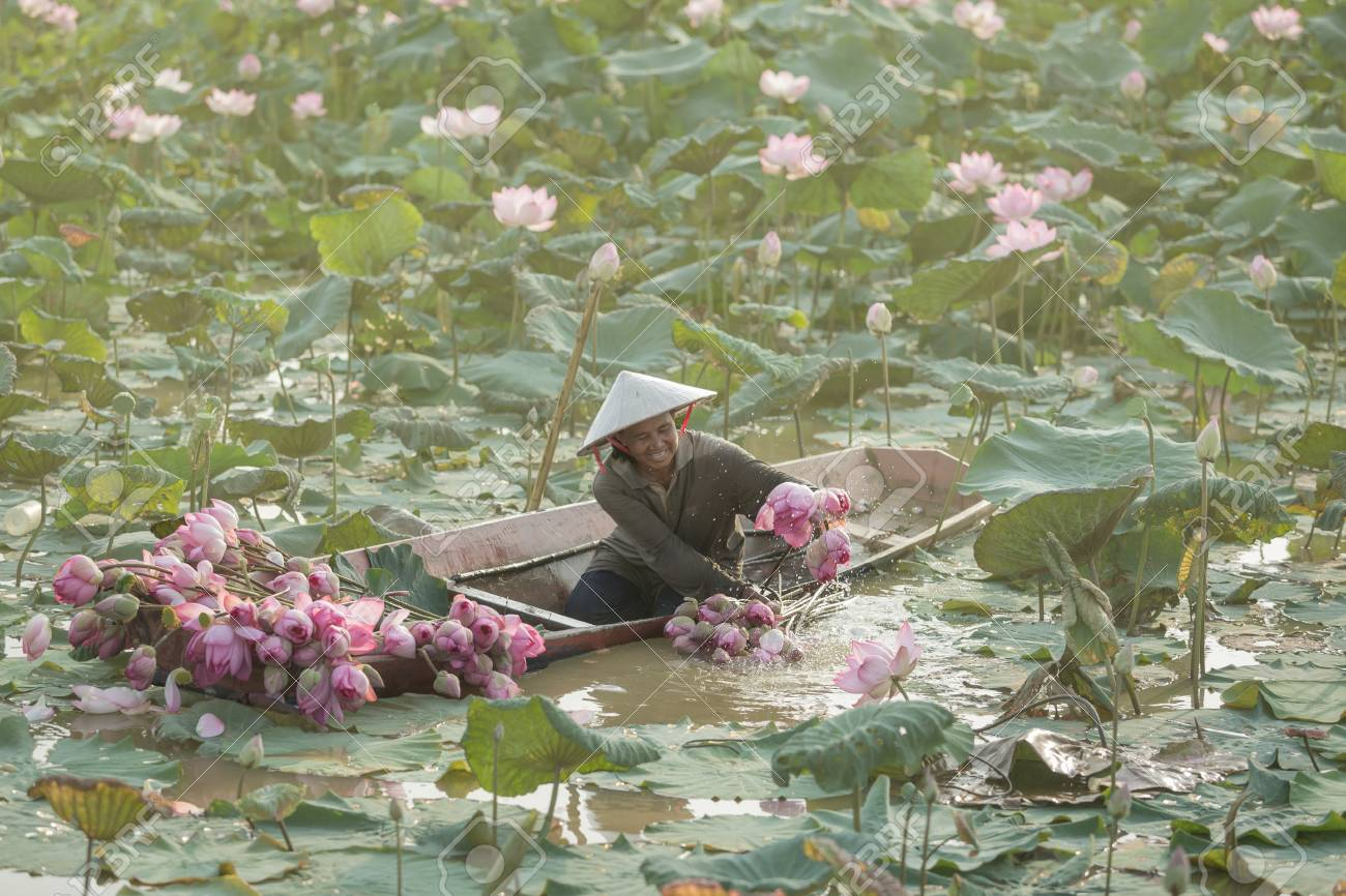 Woman Holds A Lotus Flower In The Garden The Living Conditions Of