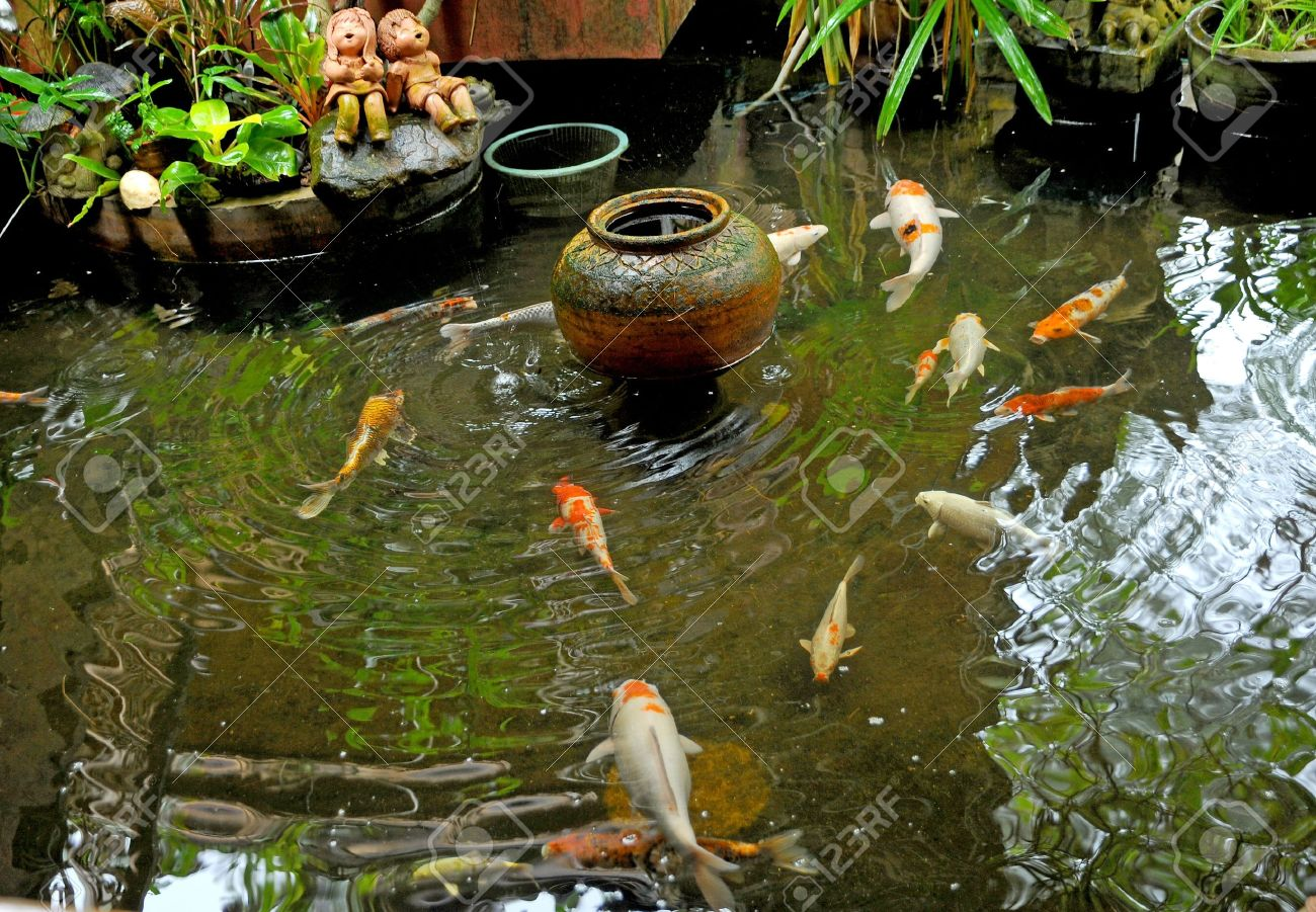 Koi Fishes In Japanese Garden Stock Photo Picture And Royalty