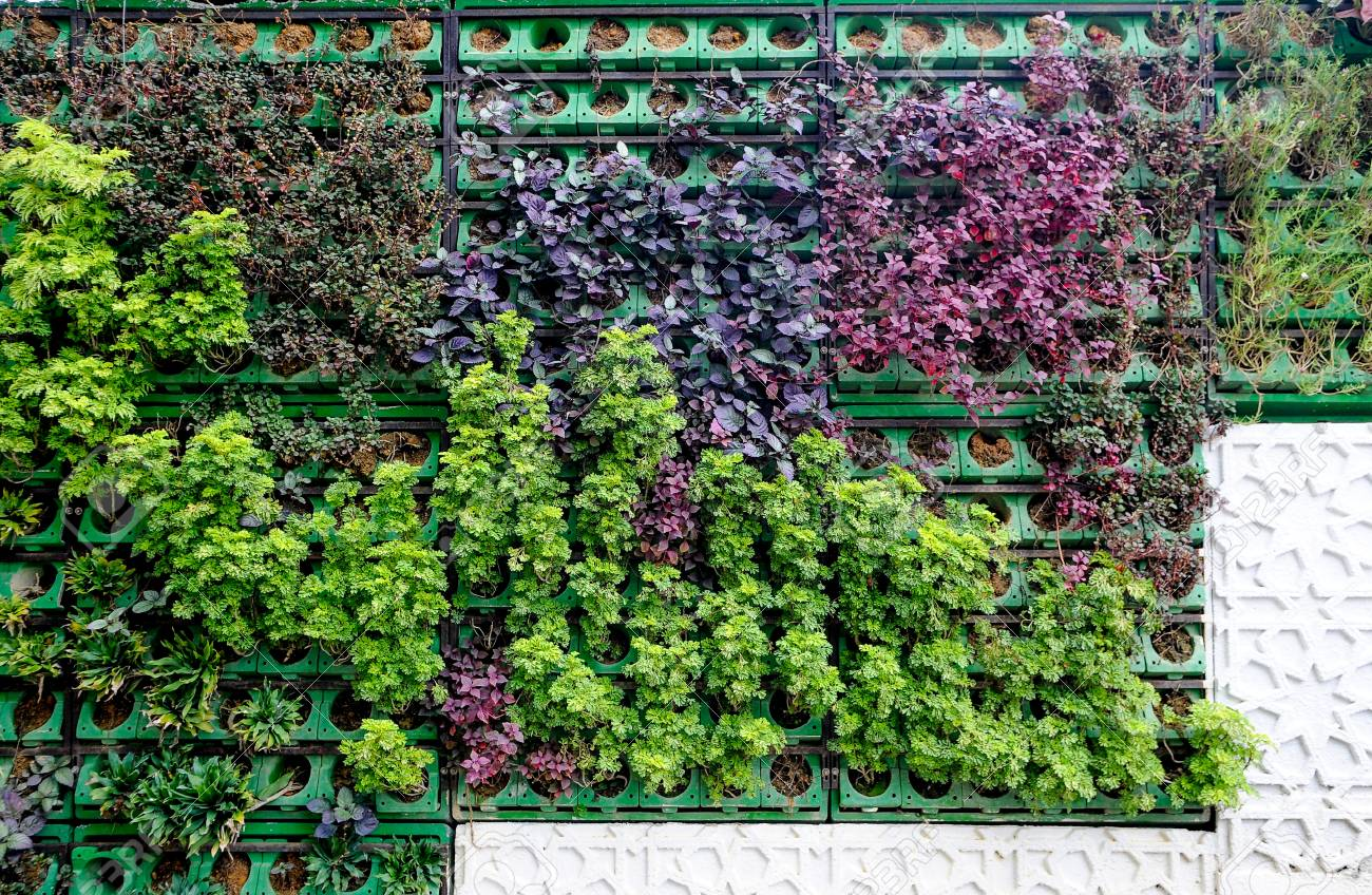 Green Wall And Vertical Garden Wall Background Variety Of Plants