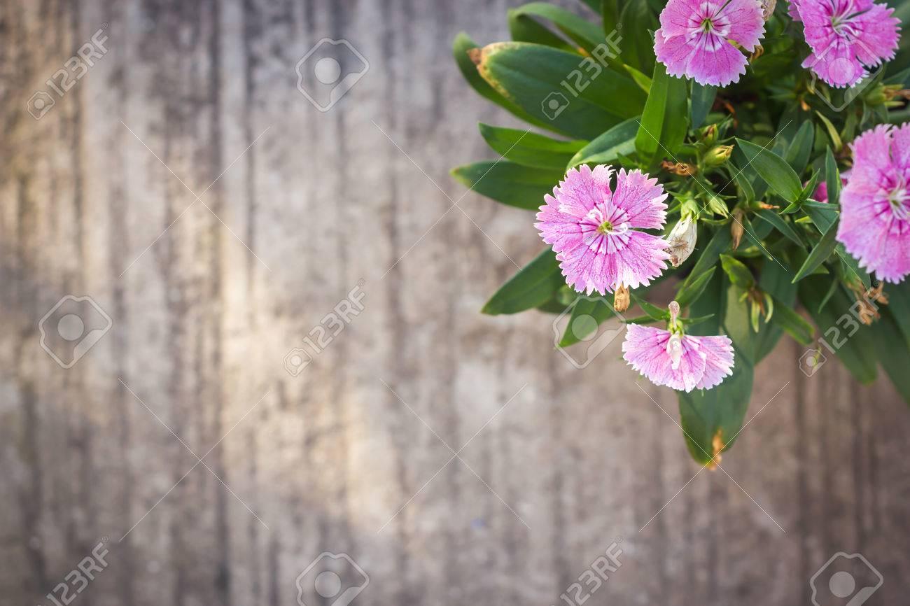 China Pink Indian Pink Flower Cement Background With Dark Vignette