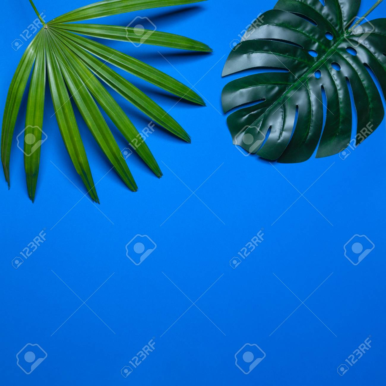 Trendy summer tropical leaves, Tropical leaves on blue background, Summer tropical backgrounds, Minimal concept, Flat lay - 104430261