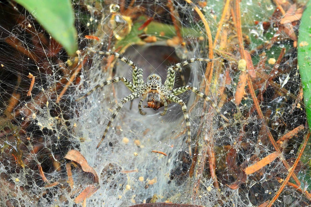 Spider Stock Photo - 18805365