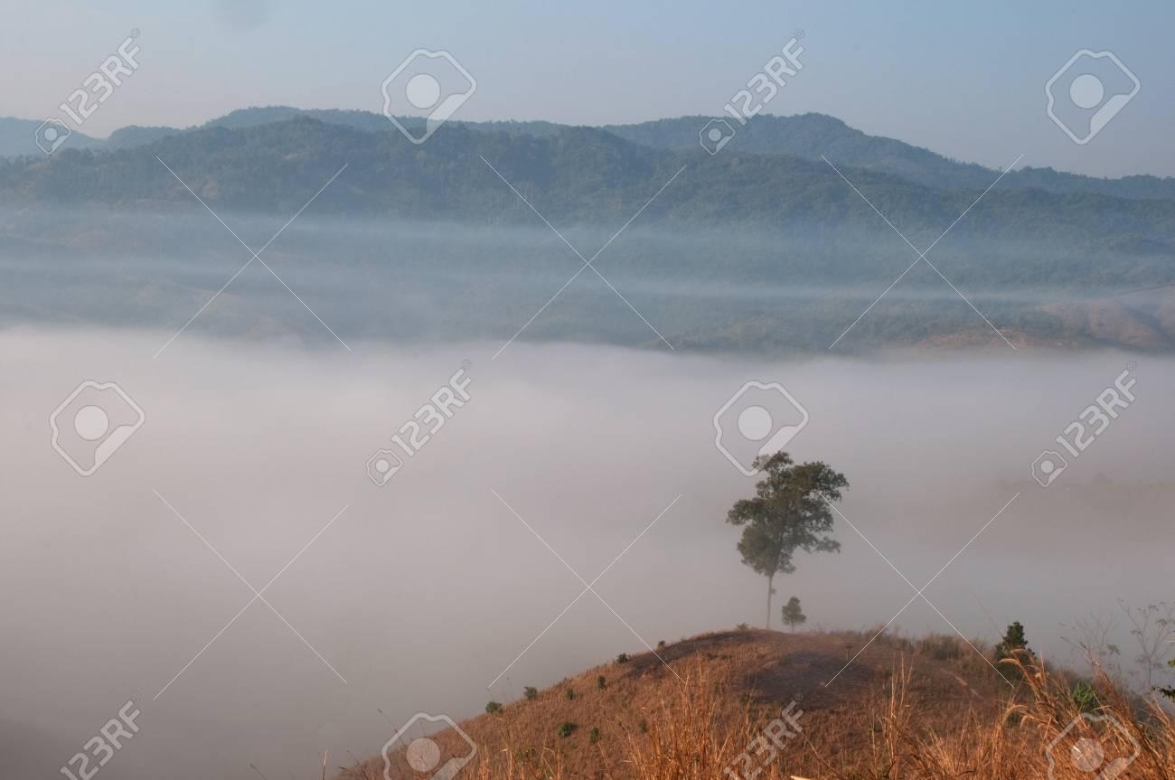 Beautiful stream fog at Northern, Thailand. Stock Photo - 8719103