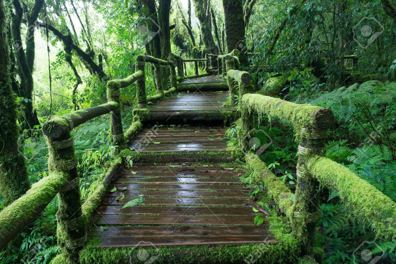 ¿Qué Hay De Mí? Capítulo168 16634556-Moss-around-the-wooden-walkway-in-rain-forest-Chiang-Mai-Province-Thailand-Stock-Photo