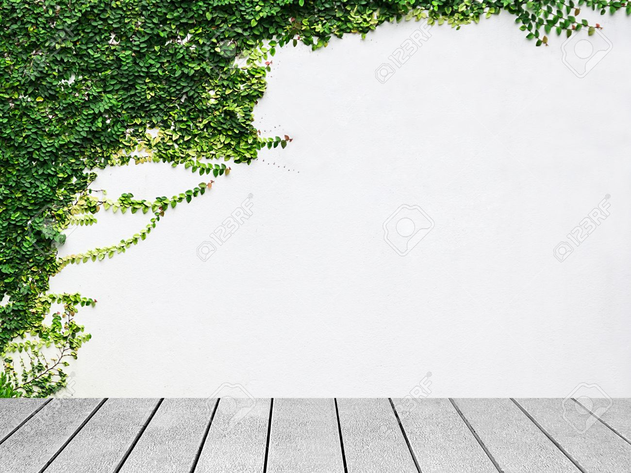 Houten plank de witte muur groene klimop plant. royalty vrije foto ...