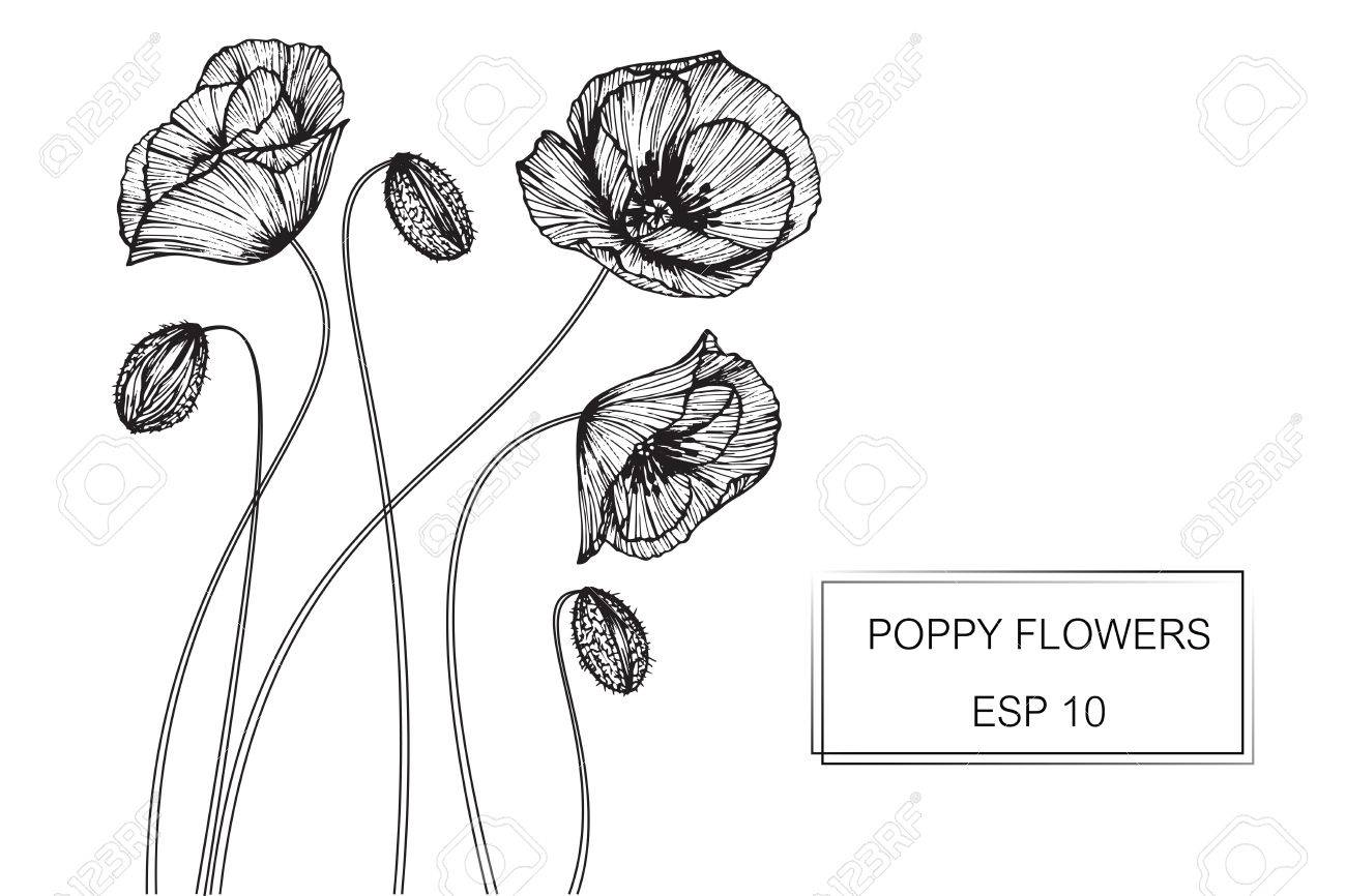 Poppy Flower Line Drawing 4k Pictures 4k Pictures Full Hq