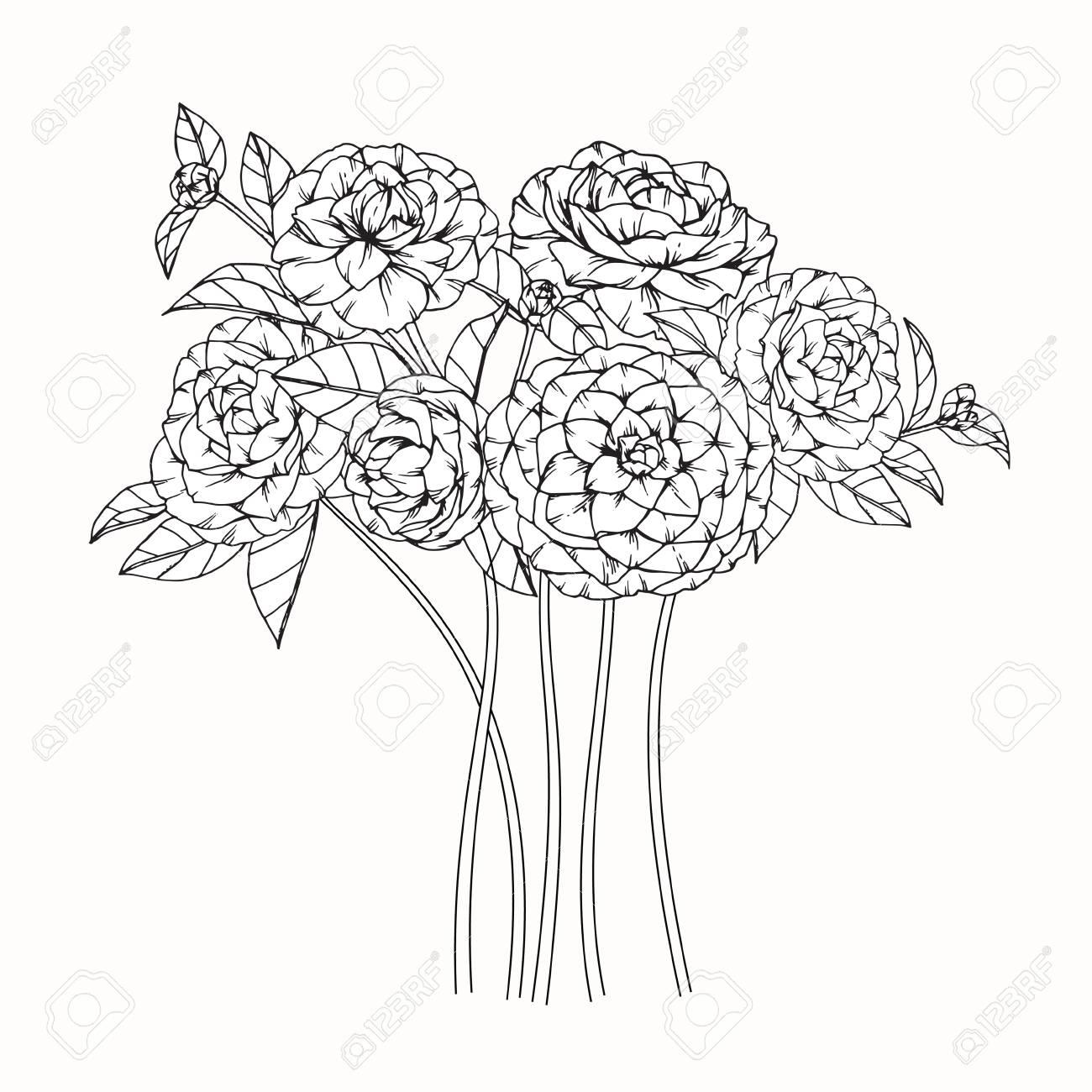 Fleurs De Camelia Dessin Et Croquis Avec Dessin Au Trait Sur Fond