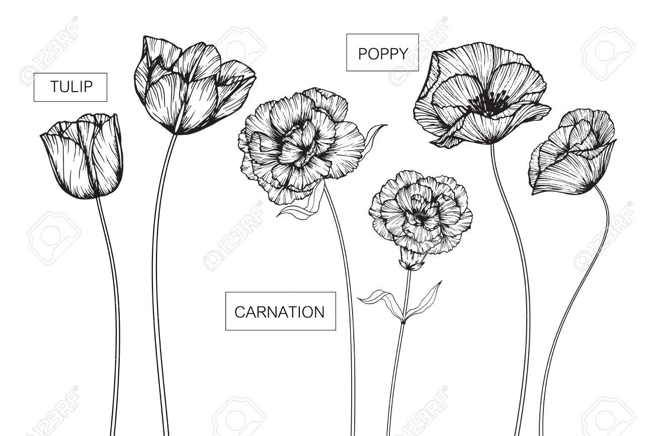 Tulip carnation and poppy flowers drawing and sketch with line art stock photo tulip carnation and poppy flowers drawing and sketch with line art on white backgrounds mightylinksfo