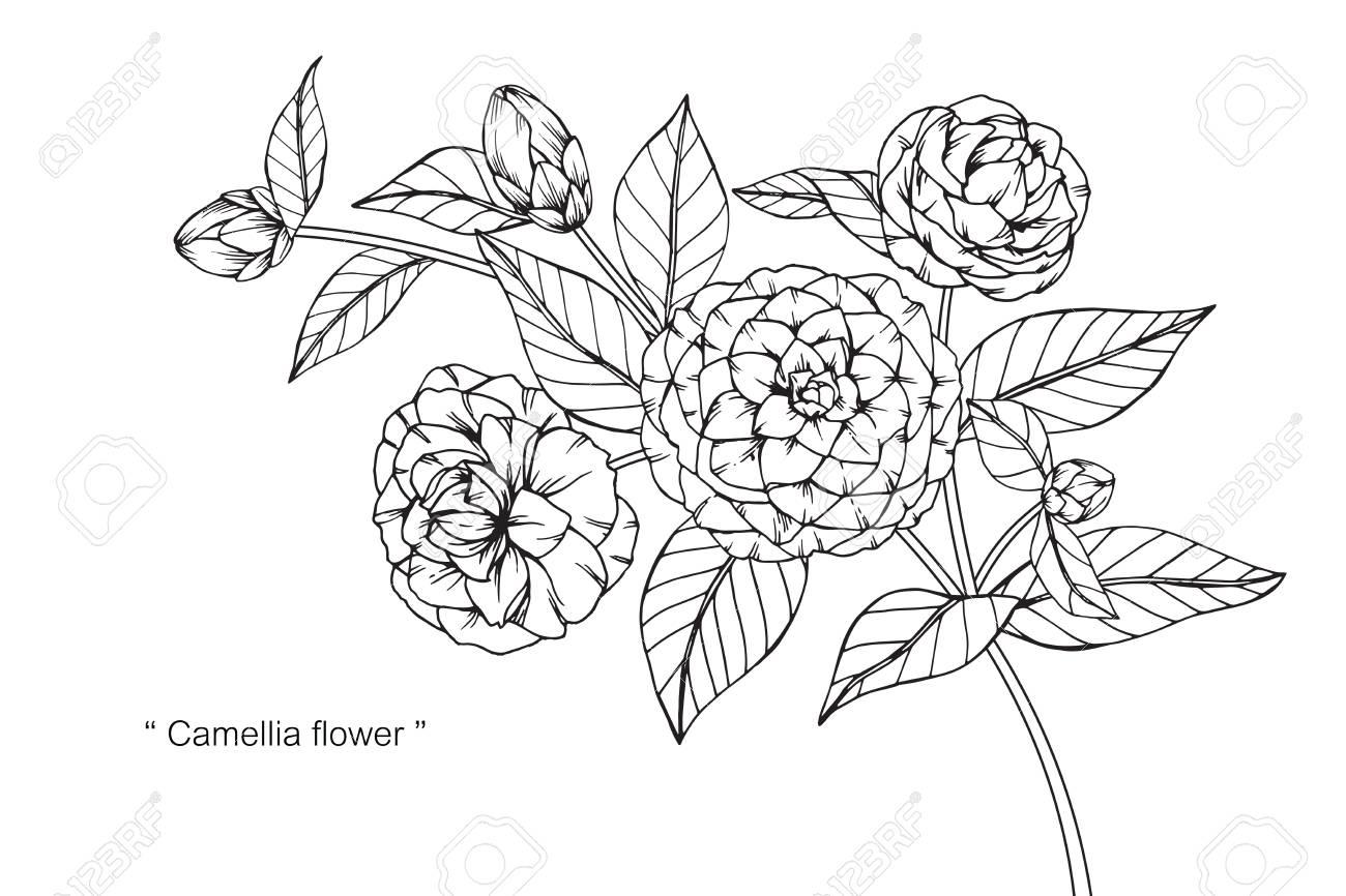 椿の花図面と黒と白の線画でスケッチのイラスト素材ベクタ Image