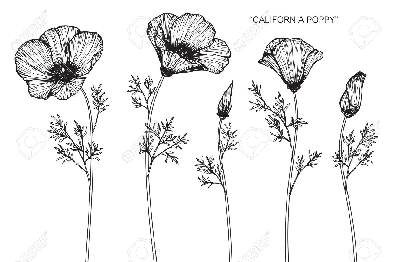 Relatively California Poppy Art Ha26 Advancedmassagebysara