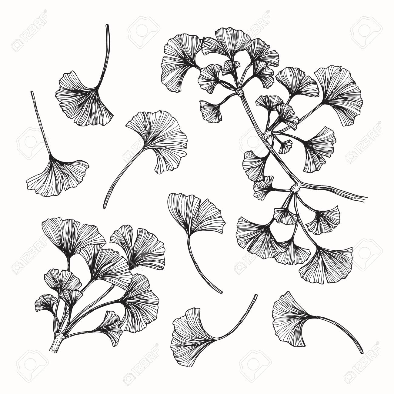 Ginkgo leaf drawing and sketch with black and white line art stock vector