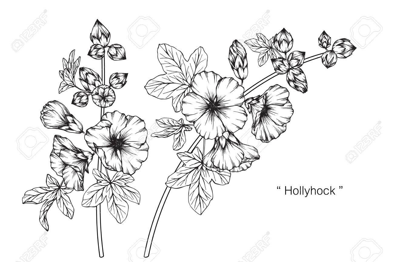 Fleur De Rose Trémière Dessin Et Croquis Avec Des Dessins Au Trait En Noir Et Blanc