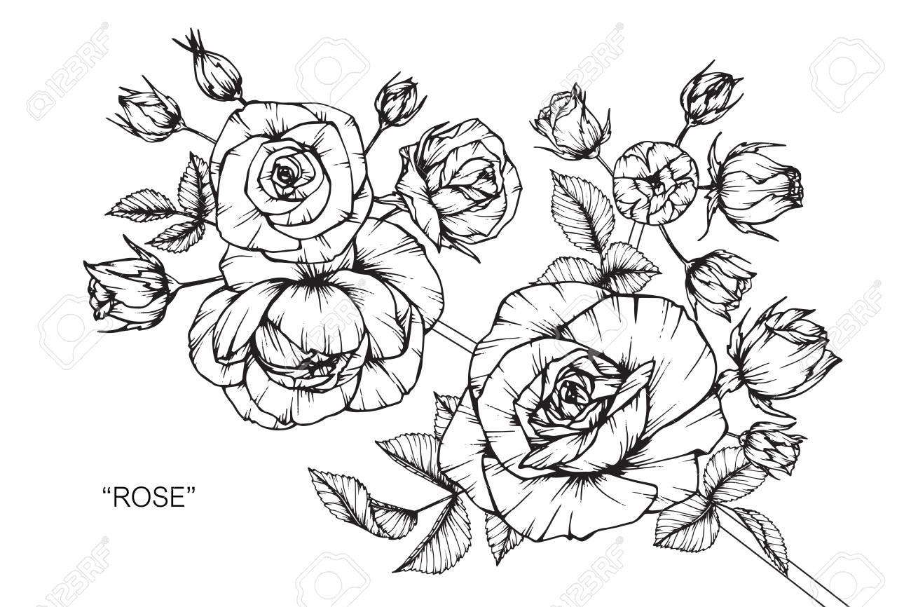 Rose Zeichnen Und Skizzieren Mit Schwarzen Und Weißen Linienkunst