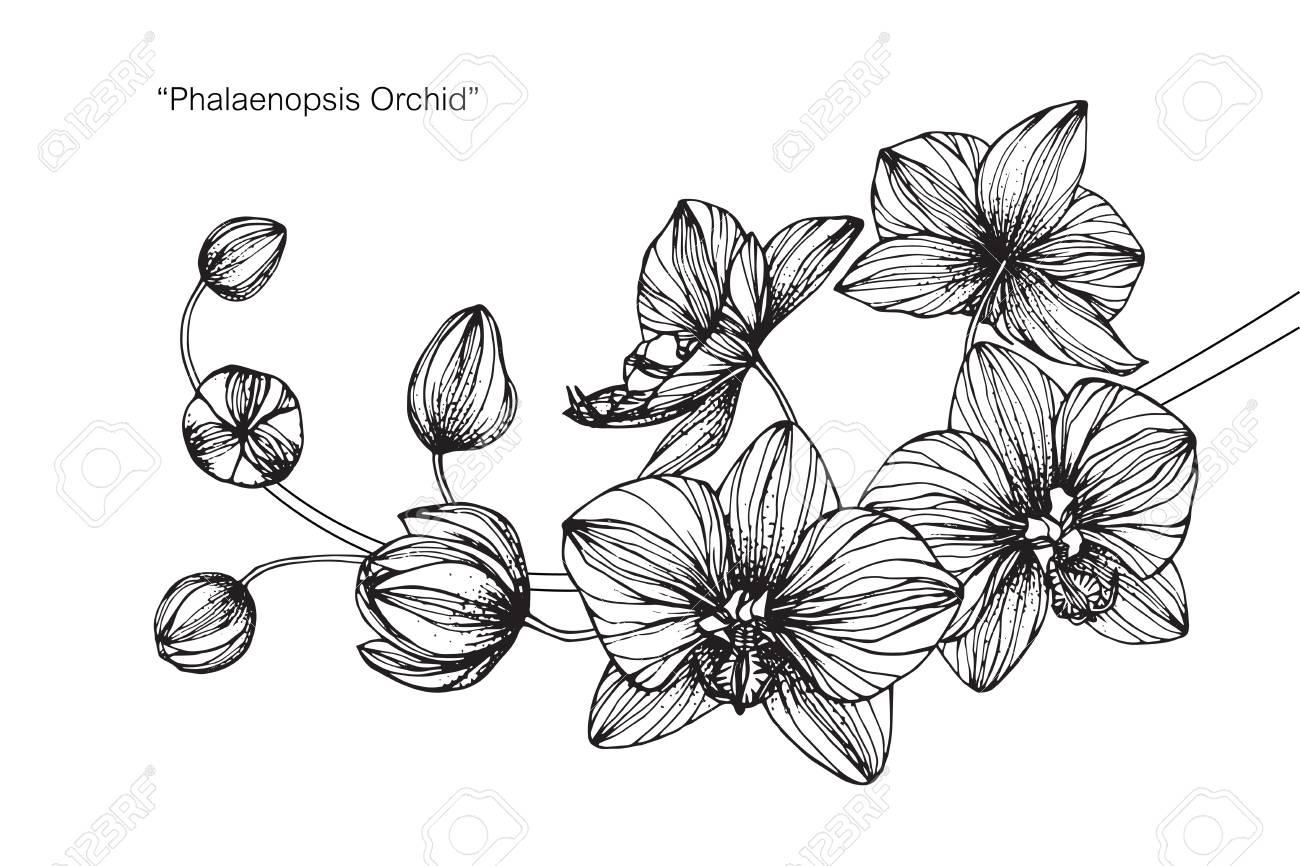 Fleur Orchidée Dessiner Et Dessiner Avec Des Dessins Au Trait En Noir Et Blanc